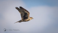 Introduction to Wildlife and Landscape Photography