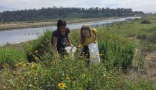 Samantha Prestrelski and Annabelle Mitchell Collecting Bush Sunflower Seed